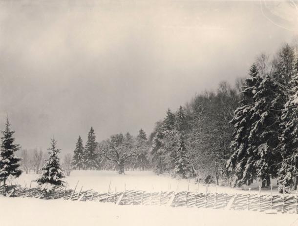Winter in the surroundings of Stockholm. Uppland, Miljöer-Skogslandskap.